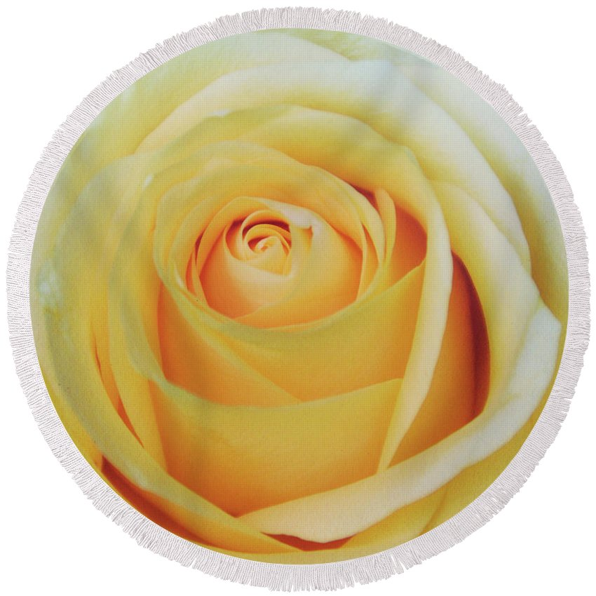 Rose Round Beach Towel featuring the photograph 18 Yellow Roses by JAMART Photography