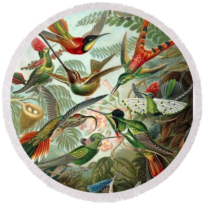 Hummingbird Round Beach Towel featuring the digital art 1899 Hummingbird Species Art Forms Of Nature Print by Retro Graphics