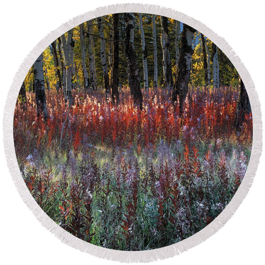 Fireweed Round Beach Towel featuring the photograph Autumn Light by Leland D Howard