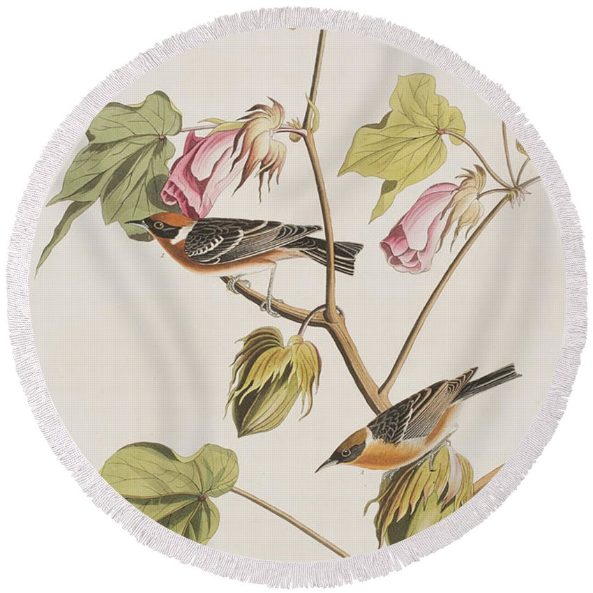 Audubon Round Beach Towel featuring the painting Bay Breasted Warbler by John James Audubon