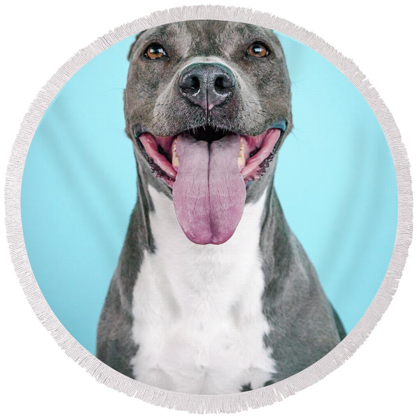 Dog Round Beach Towel featuring the photograph Bean by Pit Bull Headshots by Headshots Melrose