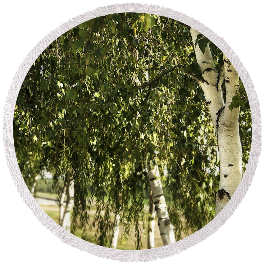 Art Round Beach Towel featuring the photograph Birch Trees by Svetlana Sewell