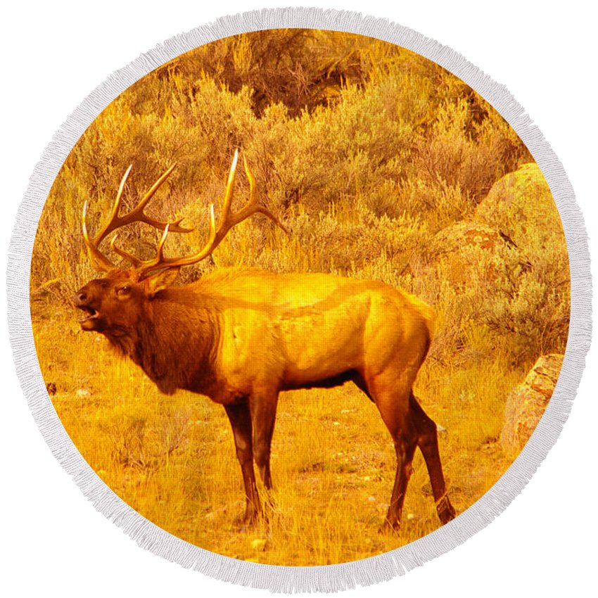 Rut Round Beach Towel featuring the photograph Bull Elk Calling Out by Jeff Swan