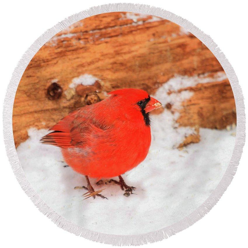 Red Cardinal Bird Round Beach Towel featuring the photograph #2 Cardinal In Snow by Reecie Steadman