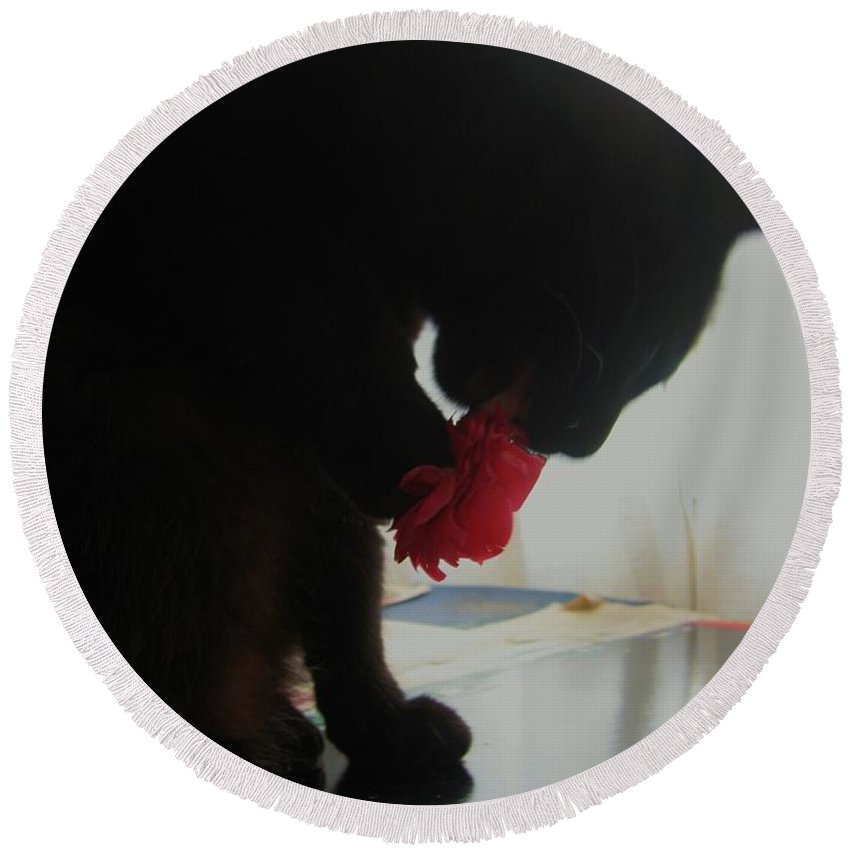 Photograph Cat Black Red Flower Camellia Round Beach Towel featuring the photograph Cat Eating Camellia by Seon-Jeong Kim