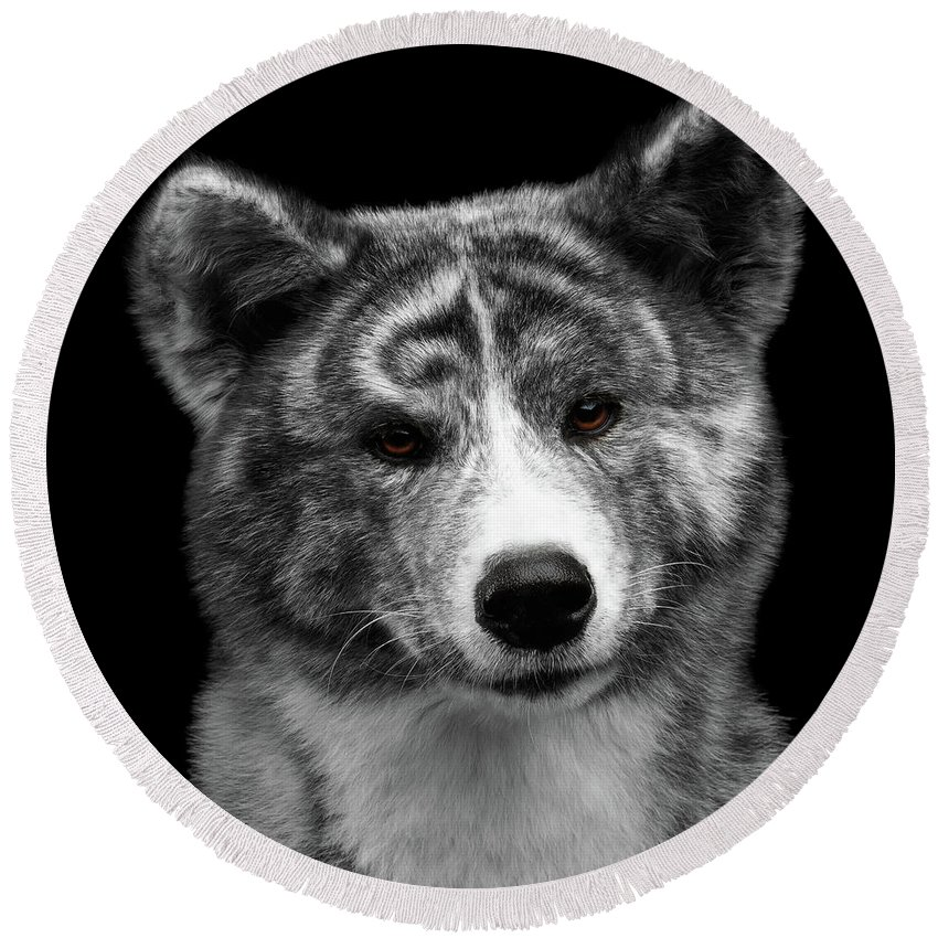 Akita Round Beach Towel featuring the photograph Closeup Portrait Of Akita Inu Dog On Isolated Black Background by Sergey Taran