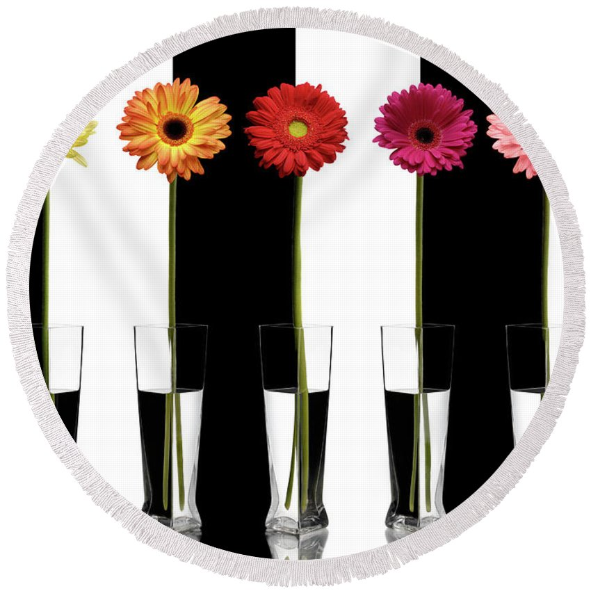 Gerberas Round Beach Towel featuring the photograph Colorful Gerberas by Maxim Images Prints