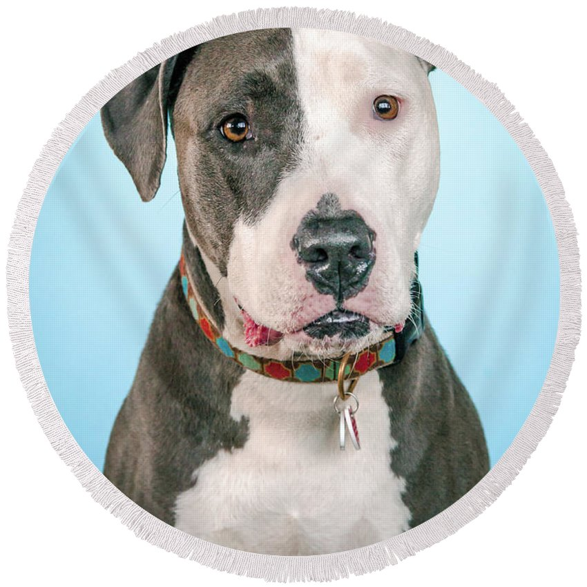Dog Round Beach Towel featuring the photograph Cara by Pit Bull Headshots by Headshots Melrose