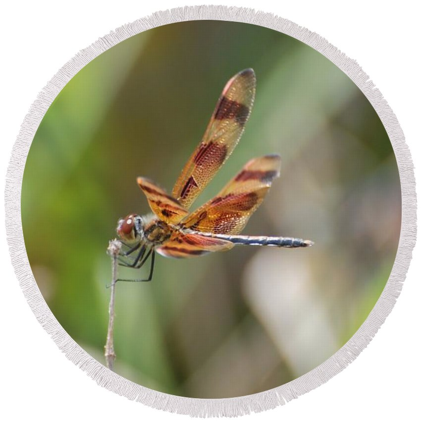 Nature Round Beach Towel featuring the photograph Dragon Fly by Rob Hans