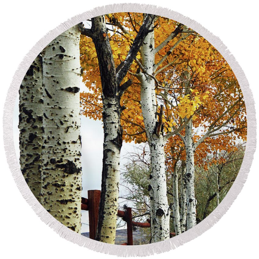 Aspens Round Beach Towel featuring the photograph Fenceline Of Fall Aspens by Tracie Fernandez