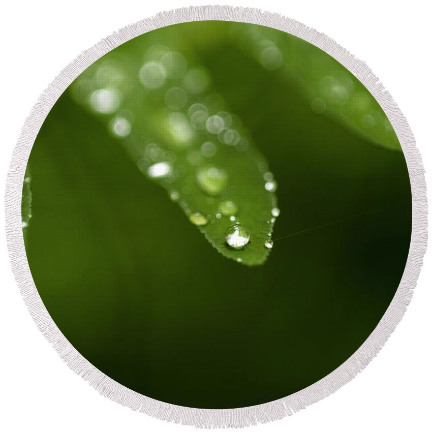 Bellevue Botanical Gardens Round Beach Towel featuring the photograph Fern Close-up Of Water Droplets by Jim Corwin