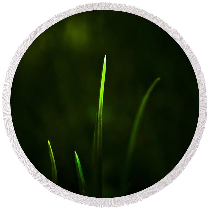 Grass Round Beach Towel featuring the photograph Grass by Svetlana Sewell