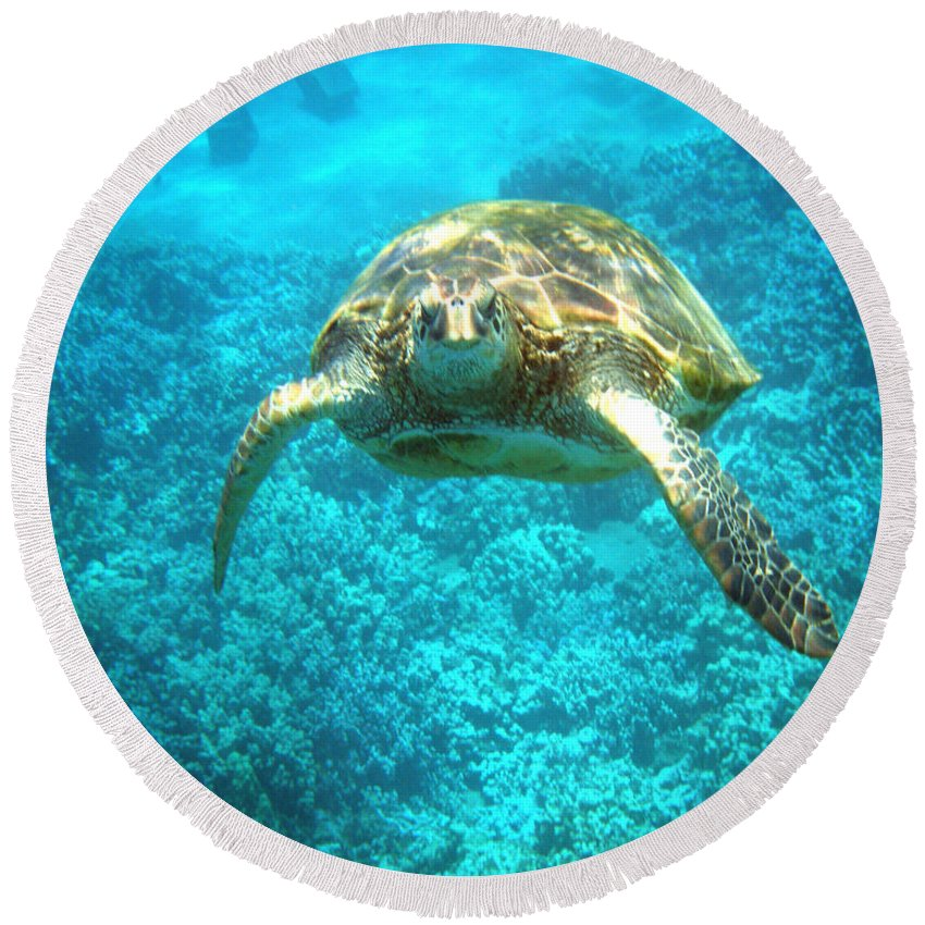 Sea Turtle Round Beach Towel featuring the photograph Here's Looking At You by Angie Hamlin