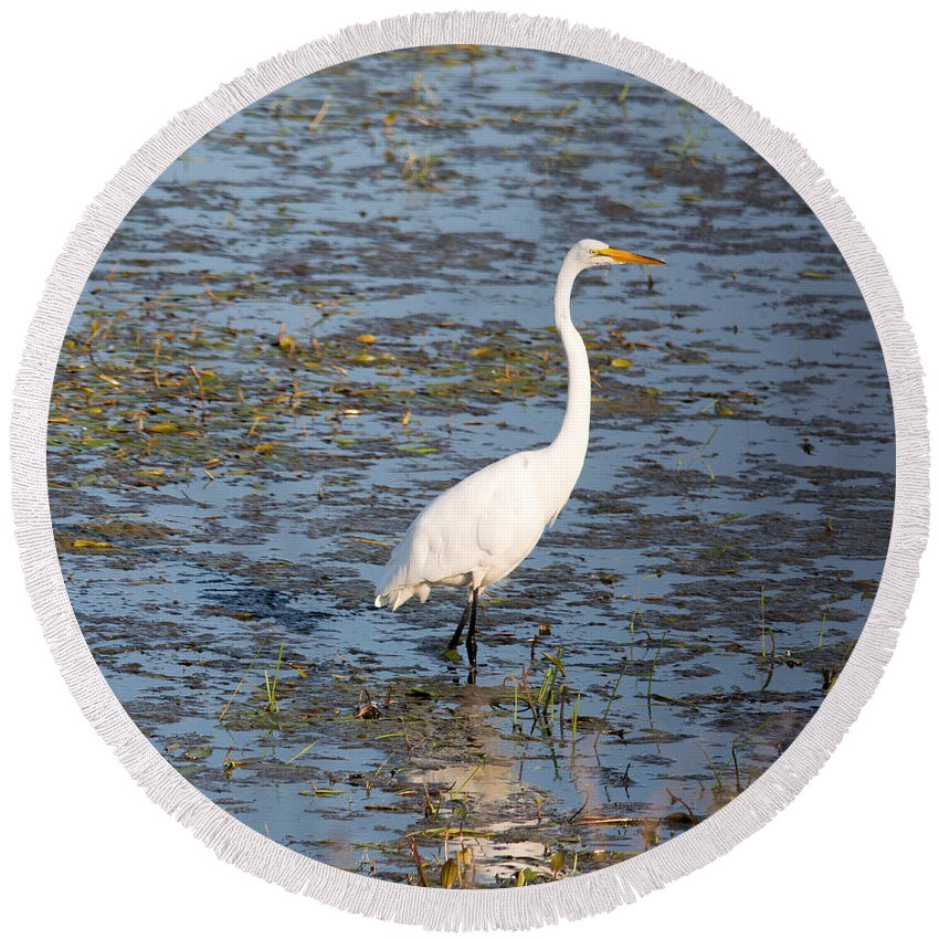 Great Egret Round Beach Towel featuring the photograph In The Water by Linda Kerkau