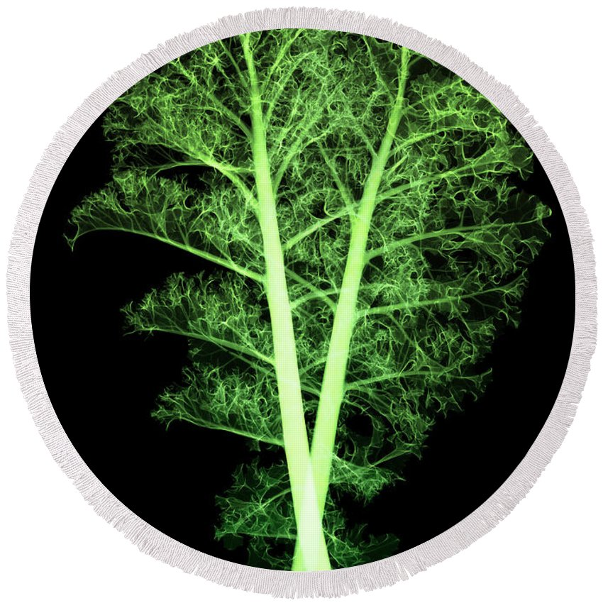 Science Round Beach Towel featuring the photograph Kale, Brassica Oleracea, X-ray by Ted Kinsman