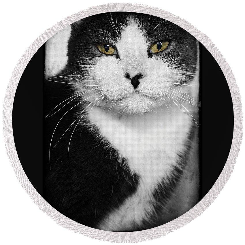 Cat Round Beach Towel featuring the photograph Kitty by Joyce Baldassarre