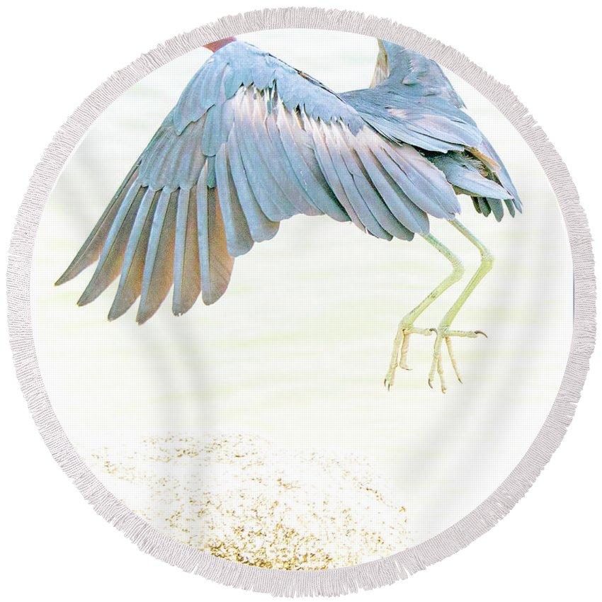 Little Blue Heron Round Beach Towel featuring the photograph Little Blue Heron In Flight by A Gurmankin