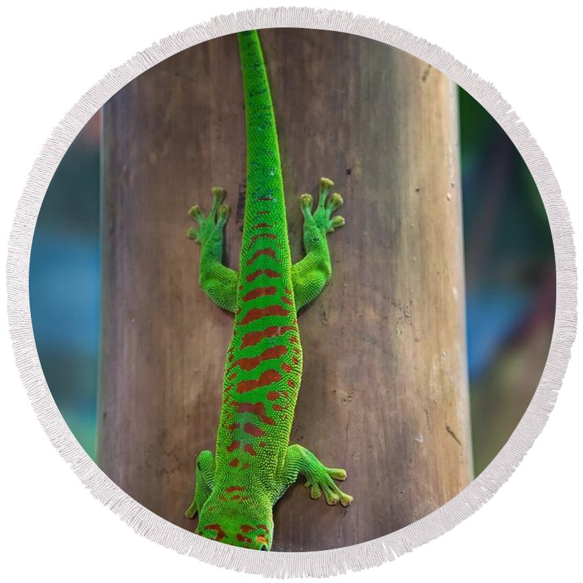Lizard Round Beach Towel featuring the photograph Lizard by FL collection