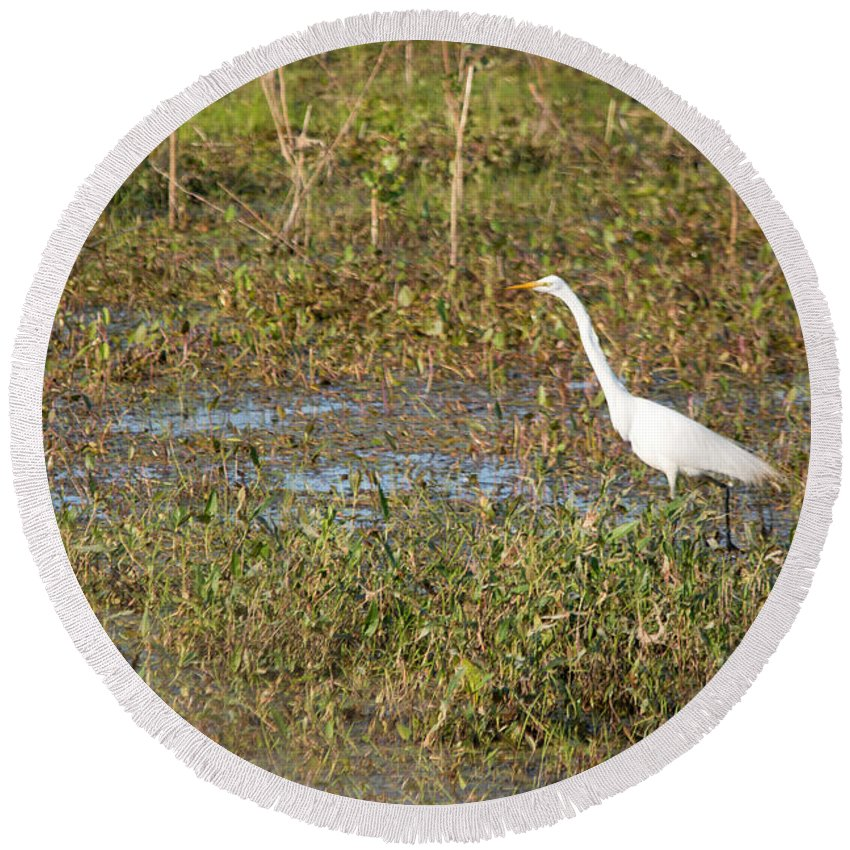 Great Egret Round Beach Towel featuring the photograph Looking by Linda Kerkau