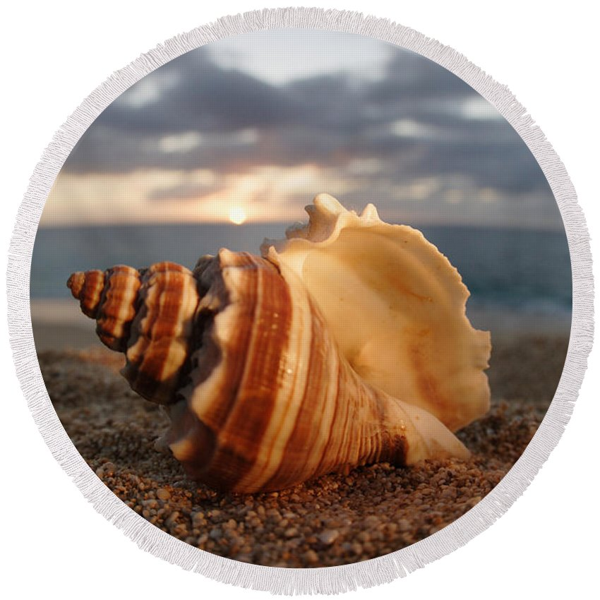 Background Round Beach Towel featuring the photograph North Shore Seashell by Vince Cavataio - Printscapes