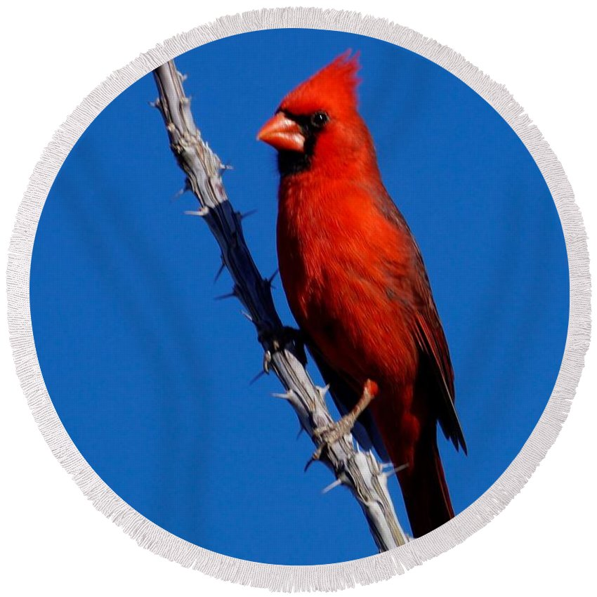 Birds Of North America Round Beach Towel featuring the photograph Northern Cardinal by Dennis Boyd