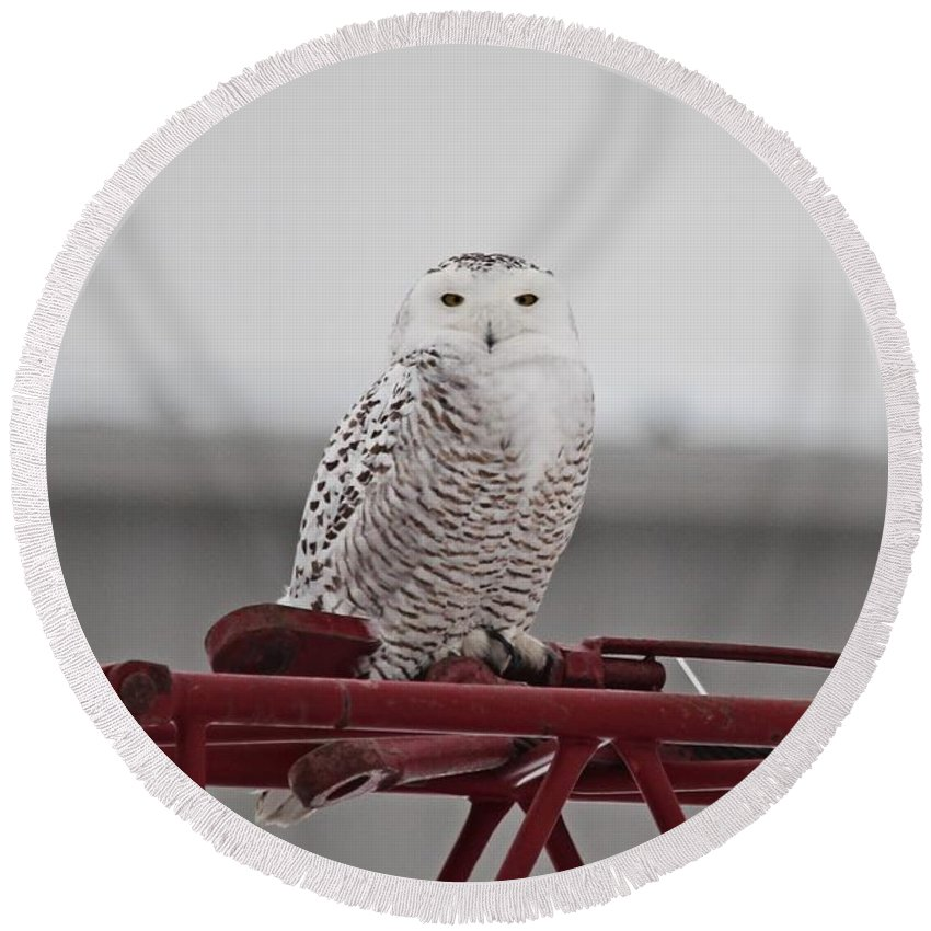 Snowy Owl Round Beach Towel featuring the photograph Snowy Owl 9470 by Joseph Marquis