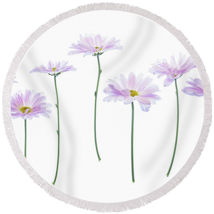 Pink Round Beach Towel featuring the pyrography Pink Daisy by Kelly Merlini