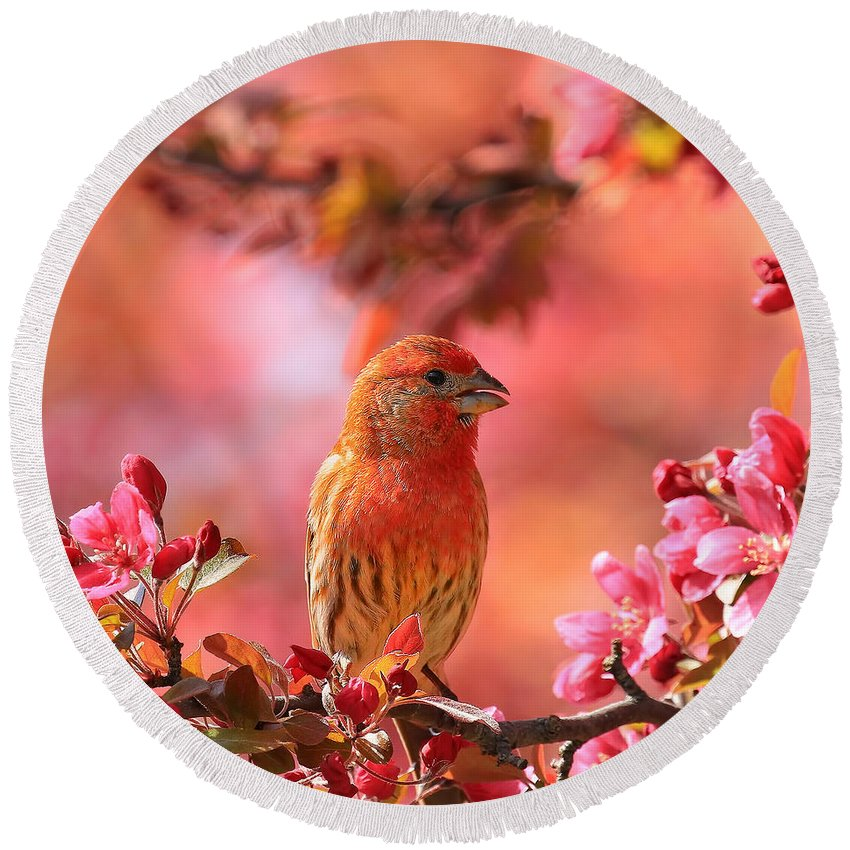 Bird Round Beach Towel featuring the photograph Pretty In Pink by John Absher
