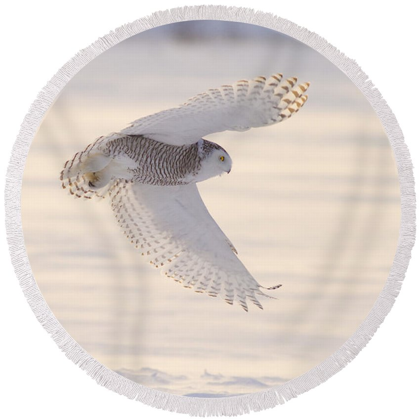 Snowy Owl Round Beach Towel featuring the photograph Snowy Owl In Flight by Marie Read