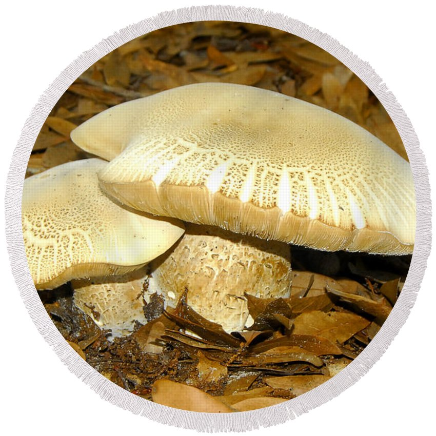 Mushrooms Round Beach Towel featuring the photograph Together by David Lee Thompson