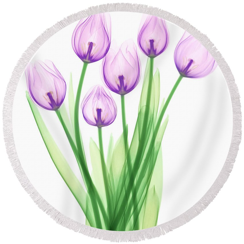 Science Round Beach Towel featuring the photograph Tulips, X-ray by Ted Kinsman