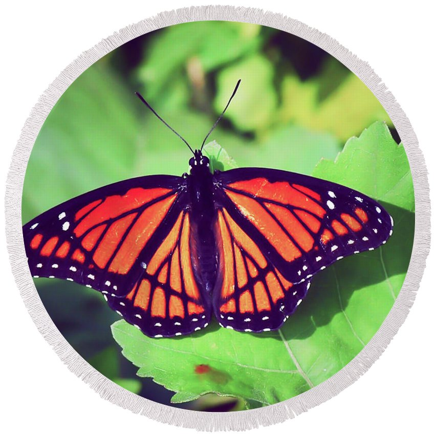 Viceroy Butterfly Round Beach Towel featuring the photograph Viceroy Butterfly  by Kerri Farley