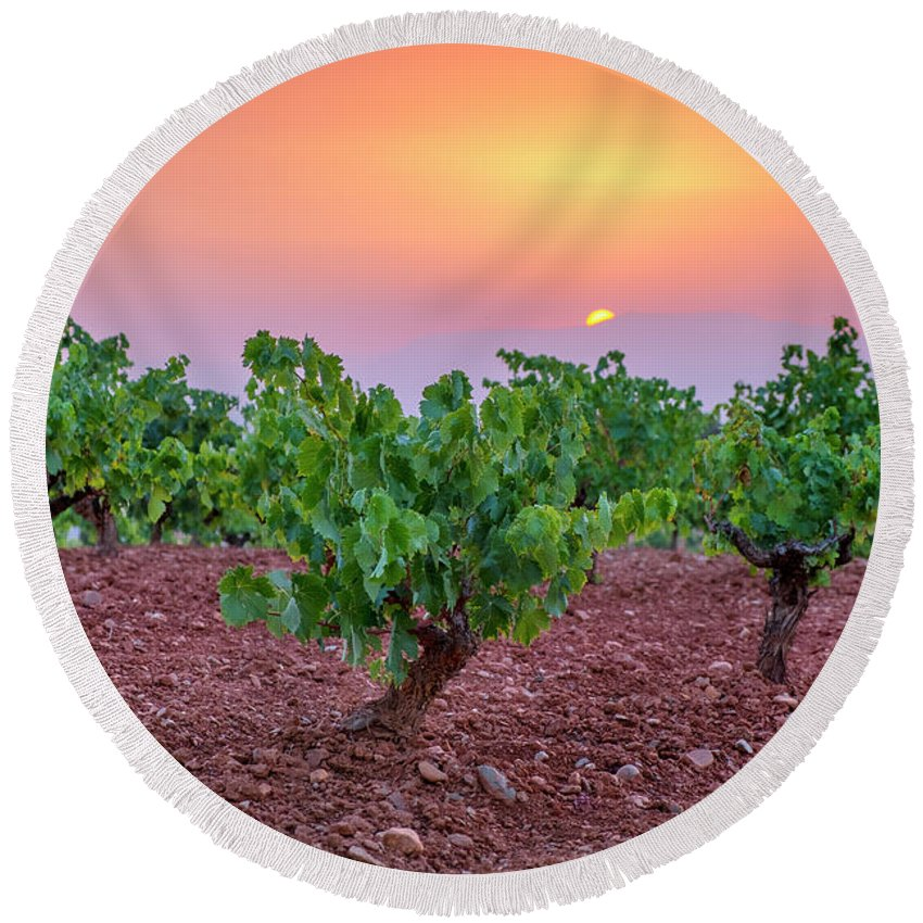 Sunset Round Beach Towel featuring the photograph Vineyards At Pink Sunset by Guido Montanes Castillo