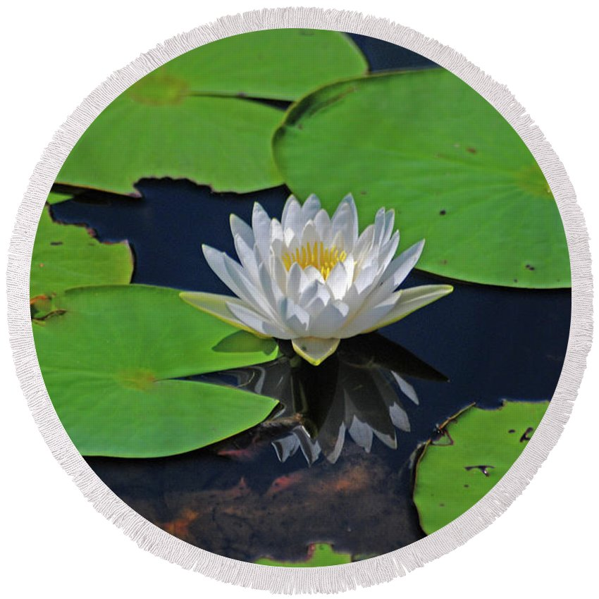 White Water Lily Round Beach Towel featuring the photograph 2- White Water Lily by Joseph Keane
