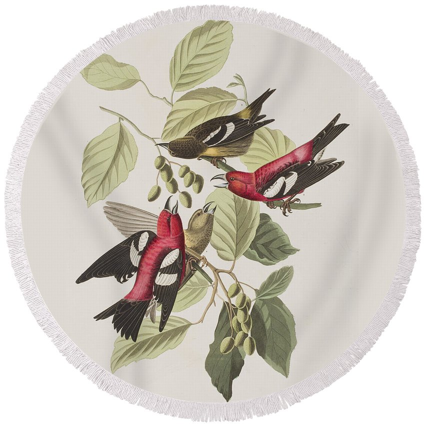 Crossbill Round Beach Towel featuring the painting White-winged Crossbill by John James Audubon