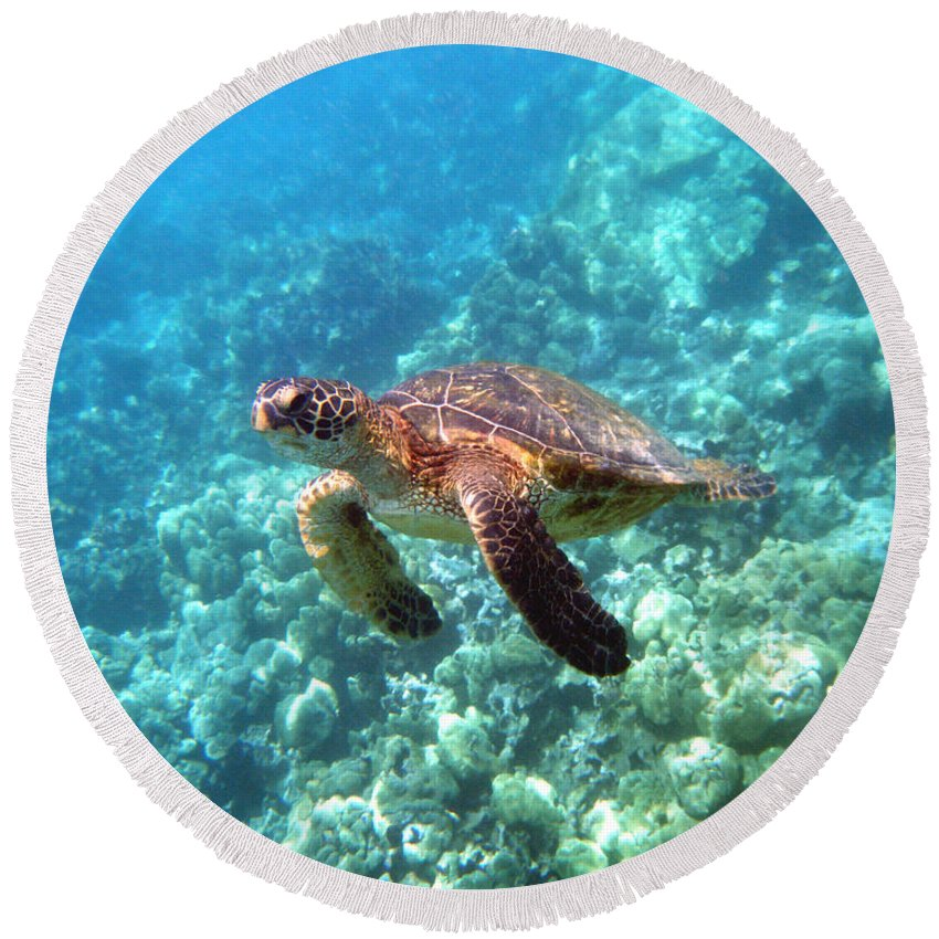 Sea Turtle Round Beach Towel featuring the photograph Young One by Angie Hamlin