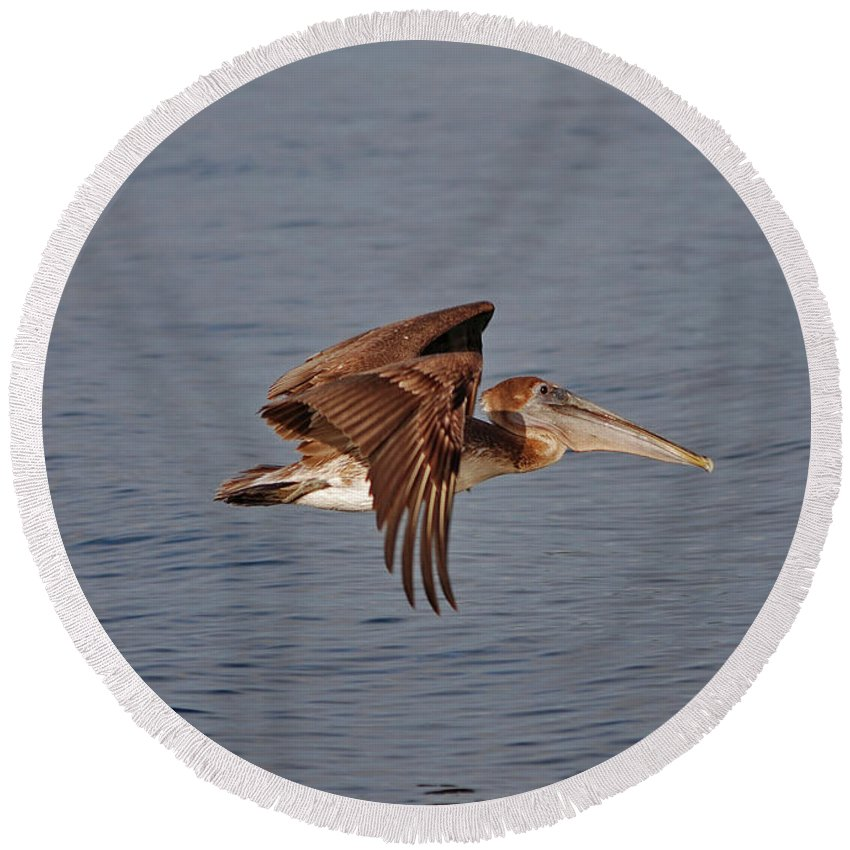 Pelican Flying Round Beach Towel featuring the photograph 20- Pelican by Joseph Keane