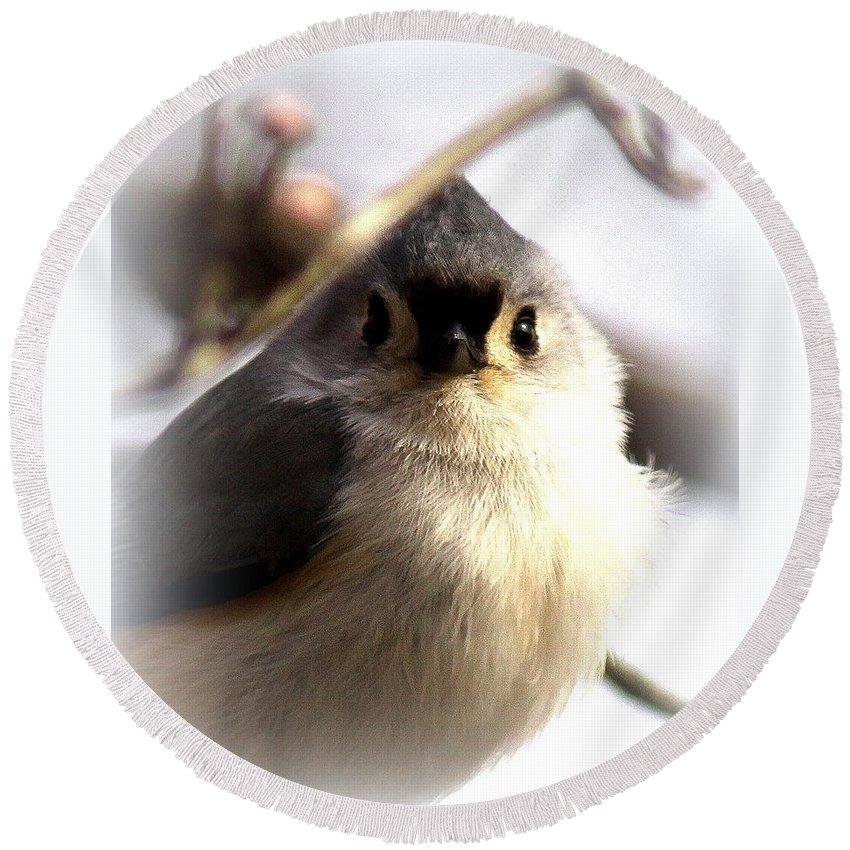 Tufted Titmouse Round Beach Towel featuring the photograph 2000-001 - Tufted Titmouse by Travis Truelove