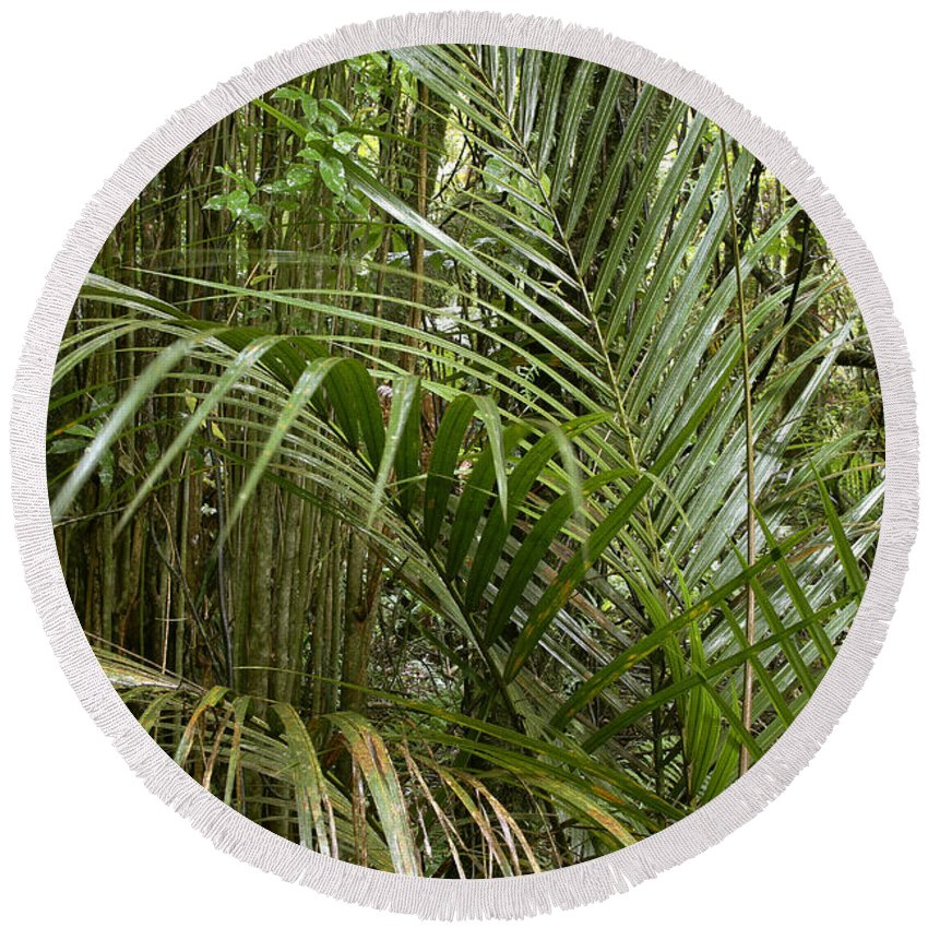 Rain Forest Round Beach Towel featuring the photograph Jungle 97 by Les Cunliffe