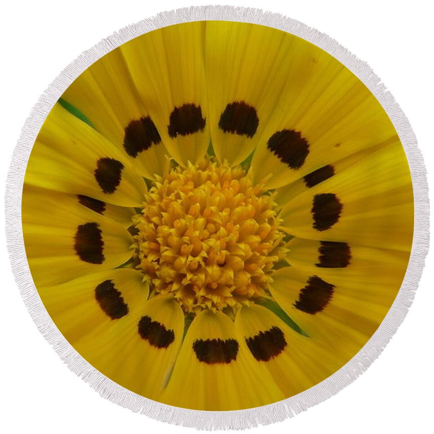 Australia Yellow Daisy Flower With The Inside Brown Ring Pattern To Create A Vibrant Radiance. Round Beach Towel featuring the photograph Australia - Yellow Daisy Flower by Jeffrey Shaw