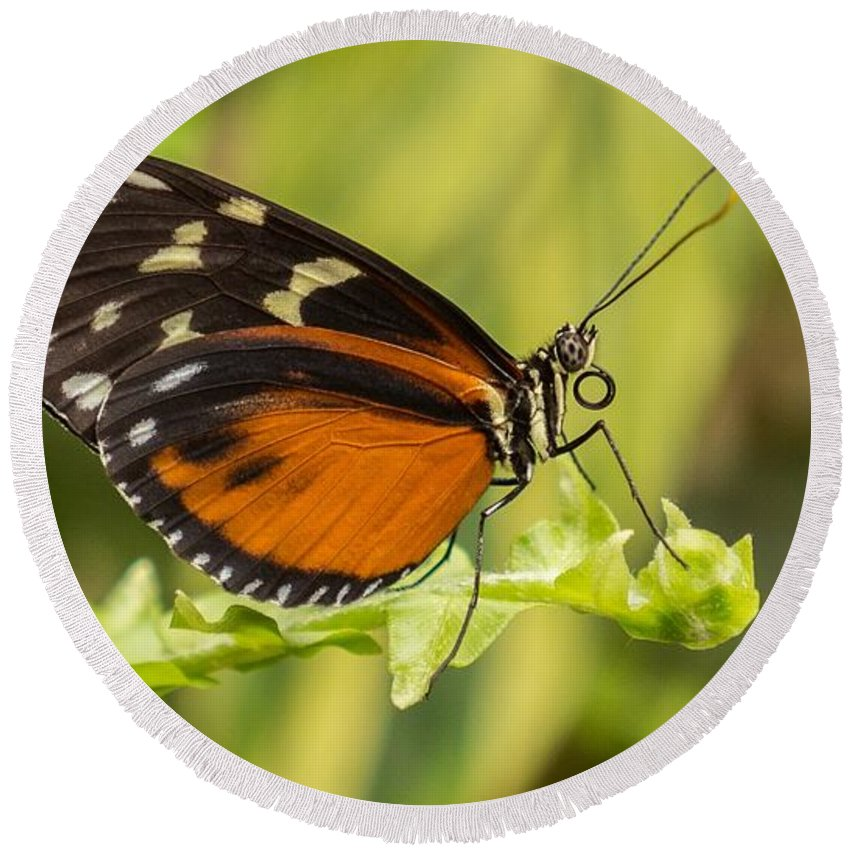 Butterfly Round Beach Towel featuring the photograph Butterfly by FL collection