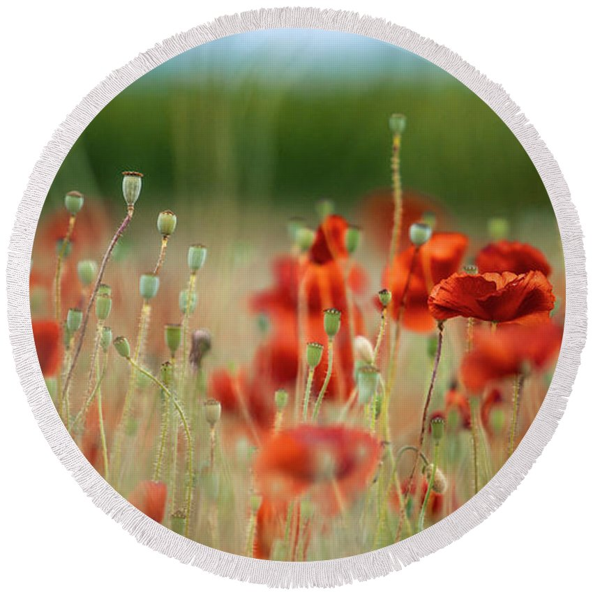 Poppy Round Beach Towel featuring the photograph Summer Poppy Meadow by Nailia Schwarz