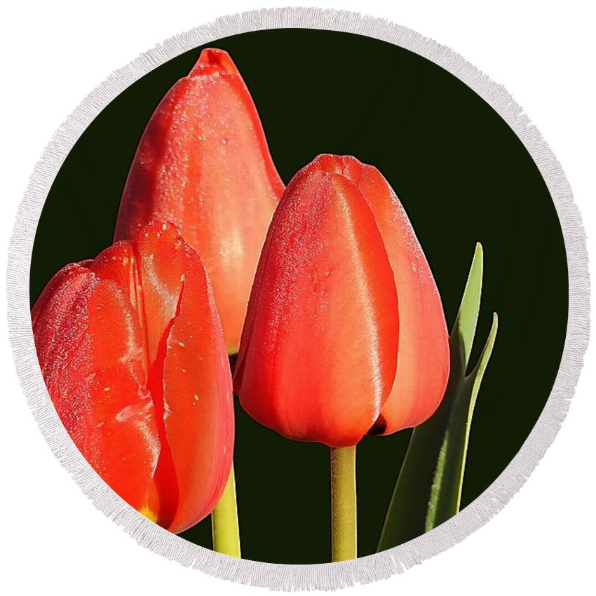 Flower Round Beach Towel featuring the photograph Tulips by FL collection