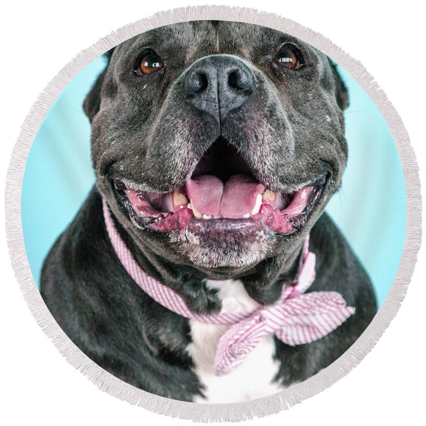 Dog Round Beach Towel featuring the photograph Ava by Pit Bull Headshots by Headshots Melrose