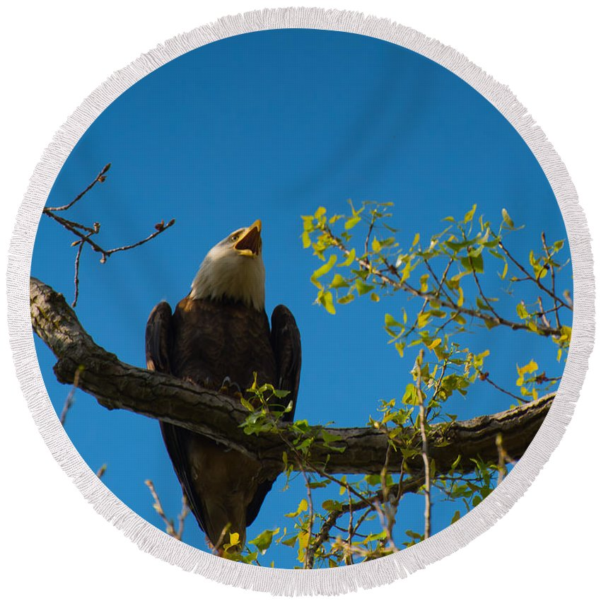Bald Eagle Round Beach Towel featuring the photograph Bald Eagle by Michael Tucker