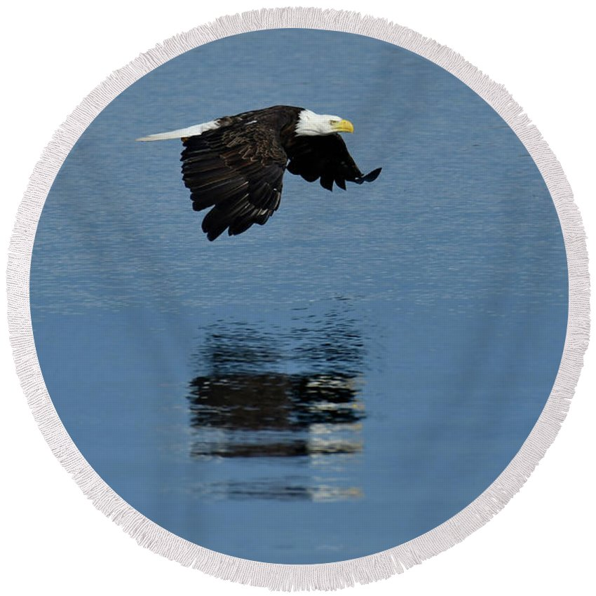 North America Round Beach Towel featuring the photograph Eagle by Christian Heeb