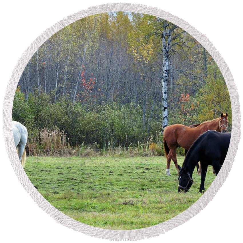 Horses Round Beach Towel featuring the photograph 3 Horses by Glenn Gordon