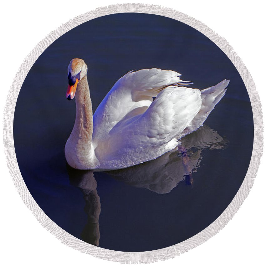 Mute Swan Round Beach Towel featuring the photograph Mute Swan by Tony Murtagh