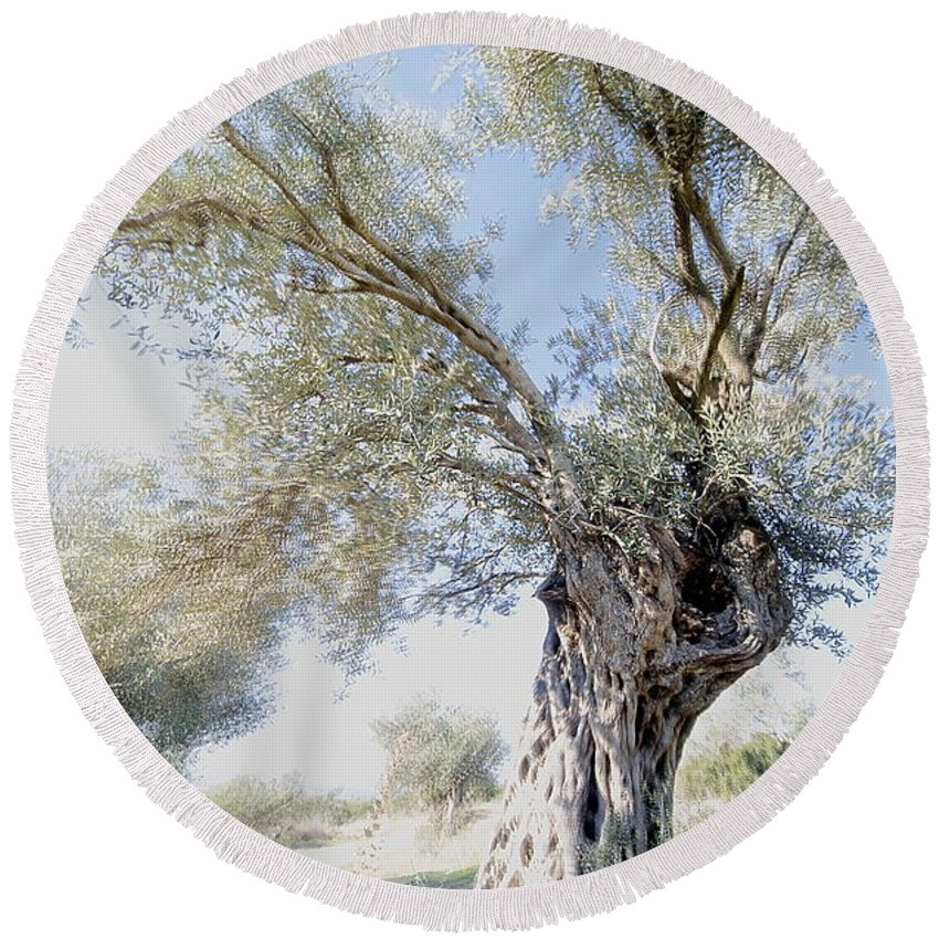 Olive Round Beach Towel featuring the photograph Olive Trees by Vladi Alon