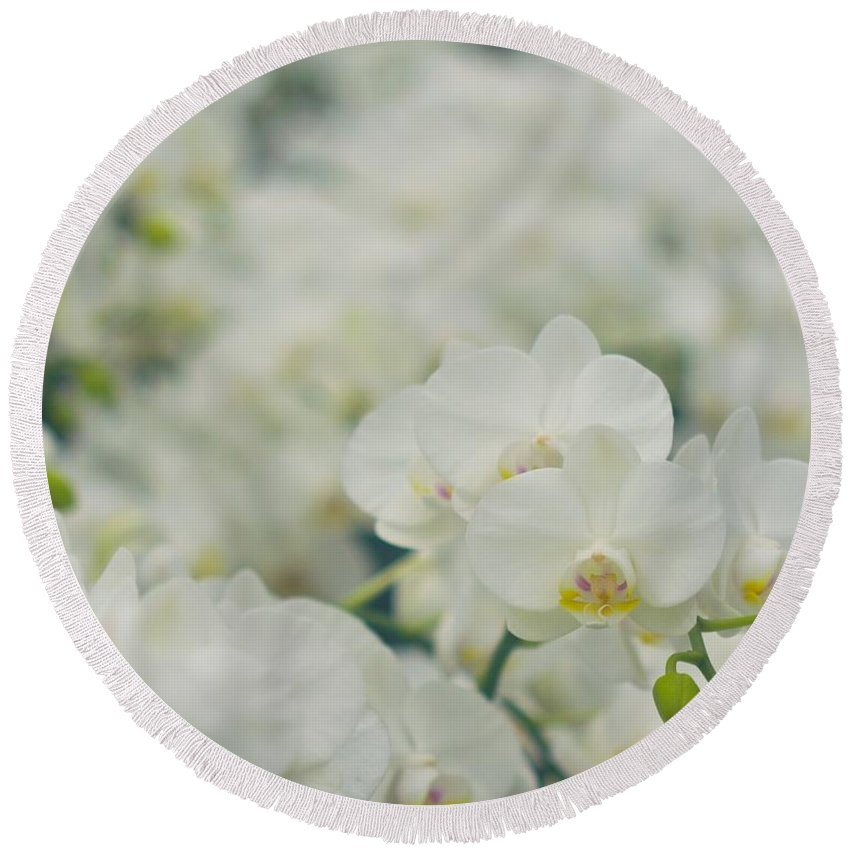 Orchids Round Beach Towel featuring the photograph Phalaenopsis by MingTa Li